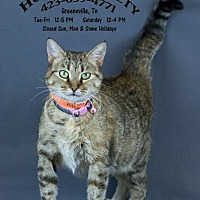 Adopt A Pet :: Molly - Greeneville, TN