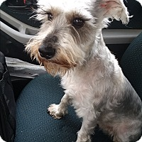 Adopt A Pet :: Yoki - Tucson, AZ