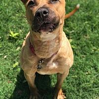 Adopt A Pet :: Lexi - Va Beach, VA