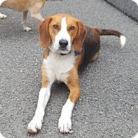 Adopt A Pet :: Crosby - Lexington, MA