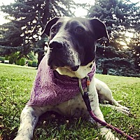 Adopt A Pet :: Mugsy **Pending Adoption - Spokane, WA