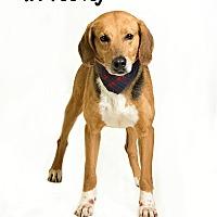 Adopt A Pet :: Mr Feeney - Troy, VA