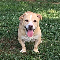Adopt A Pet :: Buster - Westminster, MD
