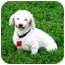 Photo 3 - Poodle (Miniature) Mix Dog for adoption in Ile-Perrot, Quebec - Gaby