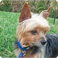 Adopt A Pet :: Rascal - Ocala, FL
