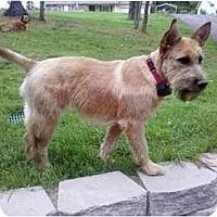 Adopt A Pet :: Piper - Glastonbury, CT