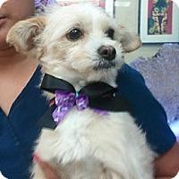 Adopt A Pet :: Skippy - Encinitas, CA