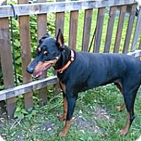 Adopt A Pet :: Titan - Allegan, MI