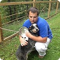 Adopt A Pet :: Millie-Prison Obedience Train - Hazard, KY