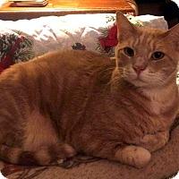 Adopt A Pet :: Jacob - Edmond, OK