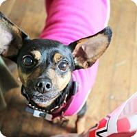 Adopt A Pet :: Dezi - Eugene, OR