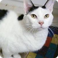 Adopt A Pet :: Scruffy - North Highlands, CA