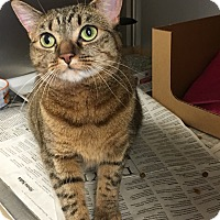 Adopt A Pet :: Maria - East Brunswick, NJ
