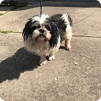 Adopt A Pet :: Jack - Garden City, MI