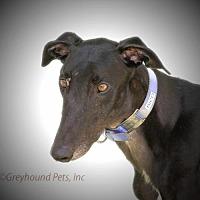 Adopt A Pet :: Rico - Woodinville, WA