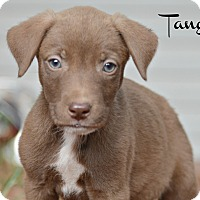 Adopt A Pet :: Tango - Glastonbury, CT