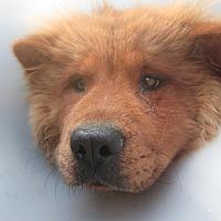 Adopt A Pet :: Poppy - Marina del Rey, CA