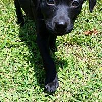 Adopt A Pet :: Sara - Bowie, MD