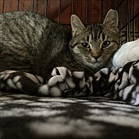 Adopt A Pet :: September - Middletown, NY
