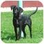 Photo 3 - Labrador Retriever Dog for adoption in Austin, Minnesota - Ezra