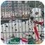 Photo 4 - Dalmatian Dog for adoption in Mandeville Canyon, California - Chelsea 3