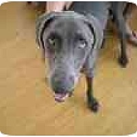 Adopt A Pet :: Waylan - Eustis, FL