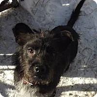 Adopt A Pet :: DJ - Clinton, ME