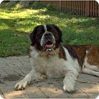 Adopt A Pet :: Noah - Wayne, NJ