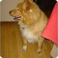Adopt A Pet :: Bobby - Waukesha, WI