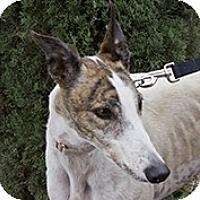 Adopt A Pet :: Last Time Donni - Cottonwood, AZ