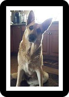 German Shepherd Dog Dog for adoption in Winchester, California - MYA