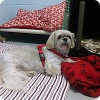Adopt A Pet :: baby - Muskegon, MI