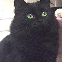 Adopt A Pet :: Effie - Oakland, OR