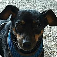 Adopt A Pet :: Rupert - Adoption Pending - Dundee, MI