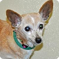 Adopt A Pet :: Betty - Port Washington, NY