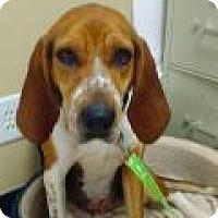 Adopt A Pet :: Ella - Kendall, NY