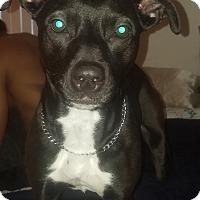 Adopt A Pet :: Oreo  COURTESY POST - Chesterfield, MI