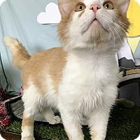 Adopt A Pet :: Ernest - Lloydminster, AB