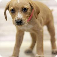 Adopt A Pet :: Slowpoke - Waldorf, MD