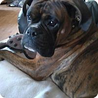 Adopt A Pet :: Kobi - Treton, ON
