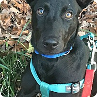 Adopt A Pet :: Daisy - Knoxville, TN