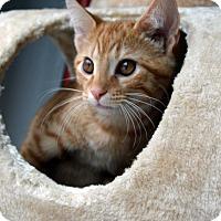 Adopt A Pet :: Gordon - Richmond, VA