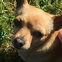 Adopt A Pet :: Minnie - Lodi, CA