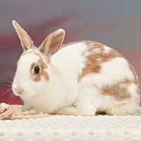 Adopt A Pet :: Runa - Marietta, GA