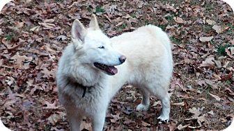Husky Mix Dog for adoption in Windham, New Hampshire - Lakoda