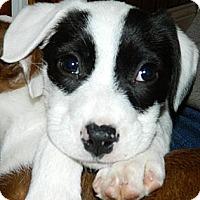 Adopt A Pet :: Fiona - Ryland Heights, KY