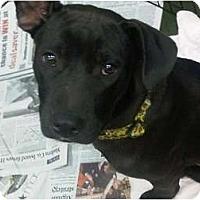 Adopt A Pet :: Aurora - Fresno, CA