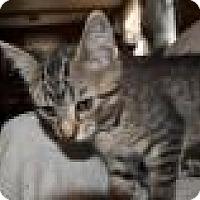 Adopt A Pet :: Alvin - Port Republic, MD