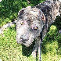 Adopt A Pet :: Maxine - Encino, CA