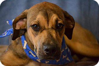 Hound (Unknown Type) Mix Dog for adoption in Okeechobee, Florida - K.C.